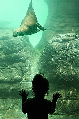 SEAL big