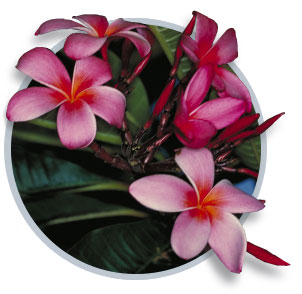Hawaiian-flowers