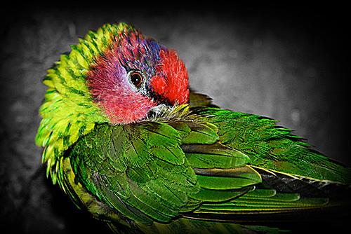 BIRD big