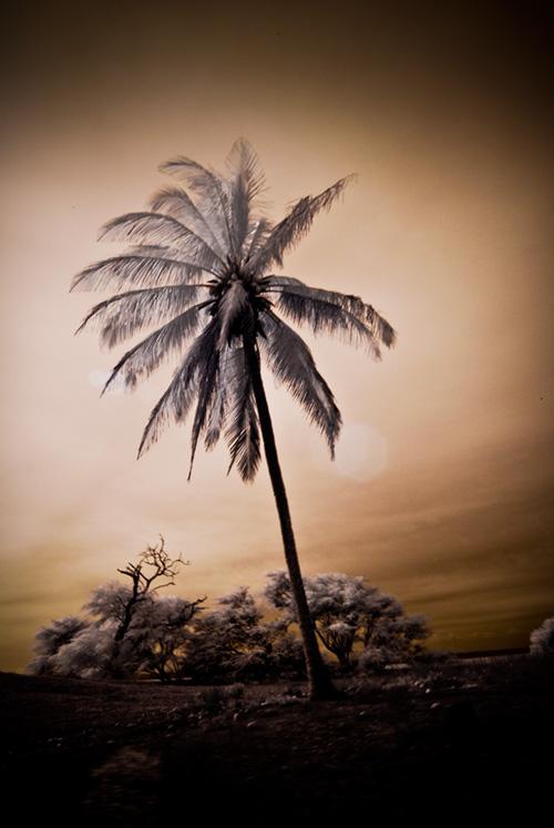 "Lone palm on a ""driveby"""