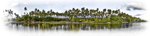 Palm-grove-PANO-daylight