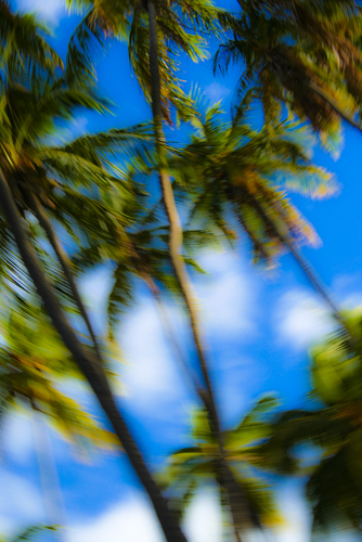 Swaying Palm Trees