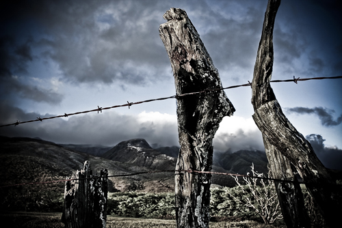 Rustic Fence Posts