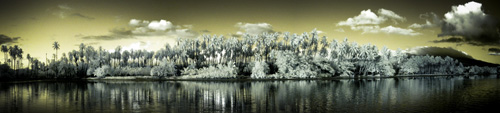 The palm grove in infrared
