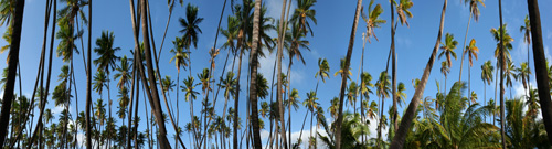 Palm-Grove-Panorama1