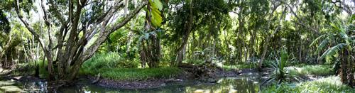 Halava Creek