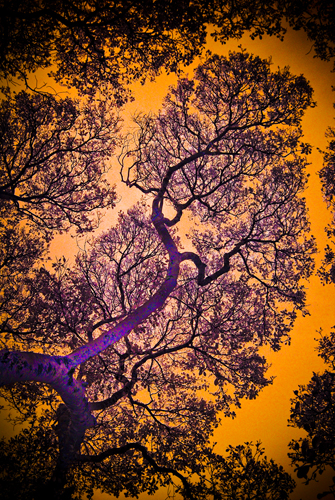 Infrared Branches