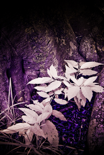 Infrared Plant